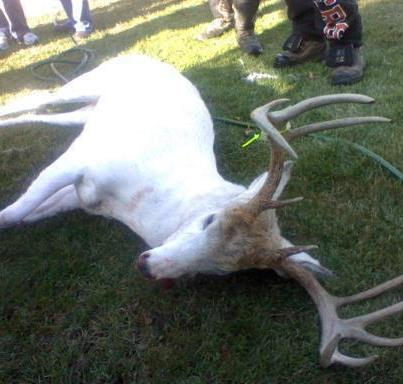Hunter Shoots an Albino Deer and Angers Locals, Wisconsin | Hunting