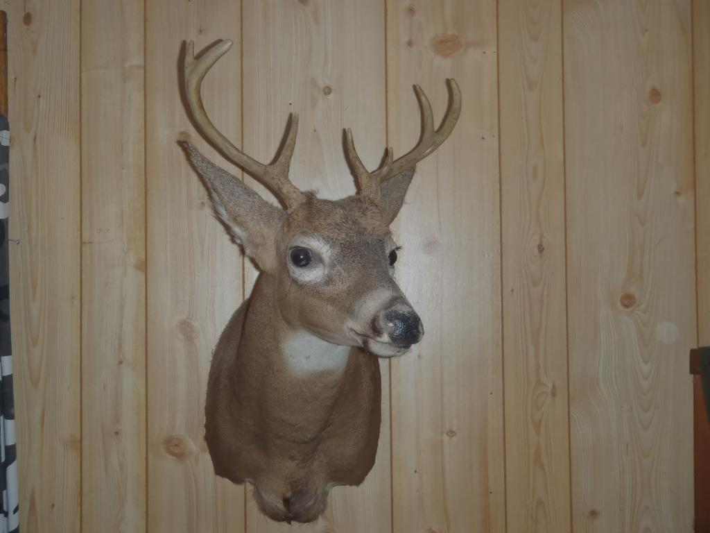 deer 7 whitetail deer 8 whitetail deer 9 whitetail deer 10 whitetail ...