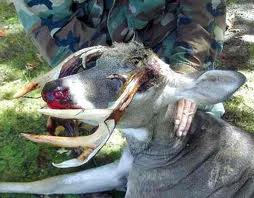 really strange deer rack hunting