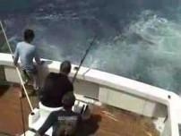 450 Pound Marlin Gets Destroyed