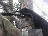 Bear Climbs Tree With Hunter