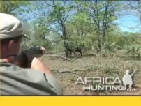 Cape Buffalo Charge while Hunting