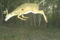 Coolest Trail Camera Photo Ever