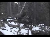 Elk Standoff Video. What would you do?