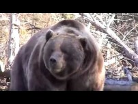 Grizzly need a crescent wrench. Video