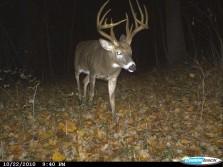 Big Tall Rack with Nice Tine Length on this Ohio Buck