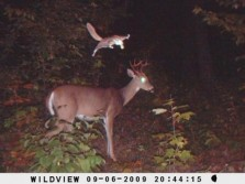 Deer and Flying Squirrel