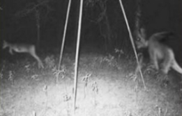 Scary Game Camera Photo