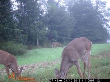 Some Does and a Buck
