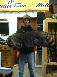 Biggest Raccoon I've Seen