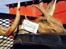 Buck Tagged.
