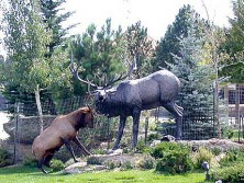 Elk sparing with statue