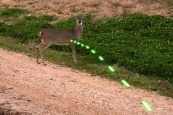 Lighted Nock