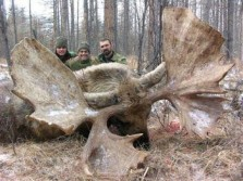 Moose Hunting in Quebec Canada: Double Rack