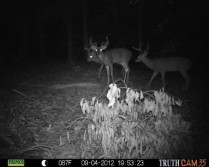 My kind of trail camera pic!