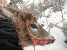 Odd Buck