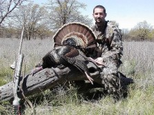 Turkey hunts