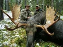 Western Canada Moose