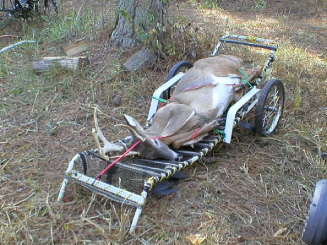 Lawn Chain To Deer Hauler Hunting