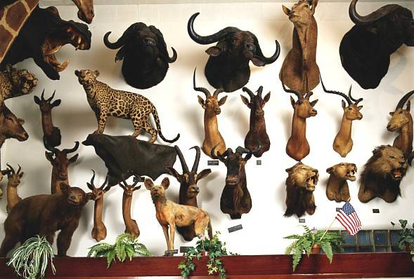 Wall Of Trophies Animals