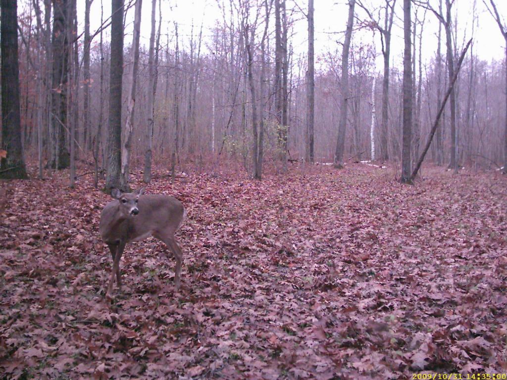 halloween buck, michigan | hunting