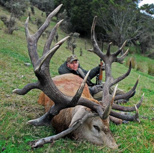 Red Stag Deer Hunting