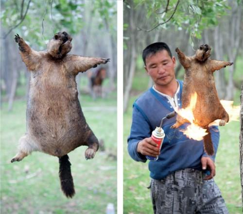 real-hunters-hunt-marmots.jpg