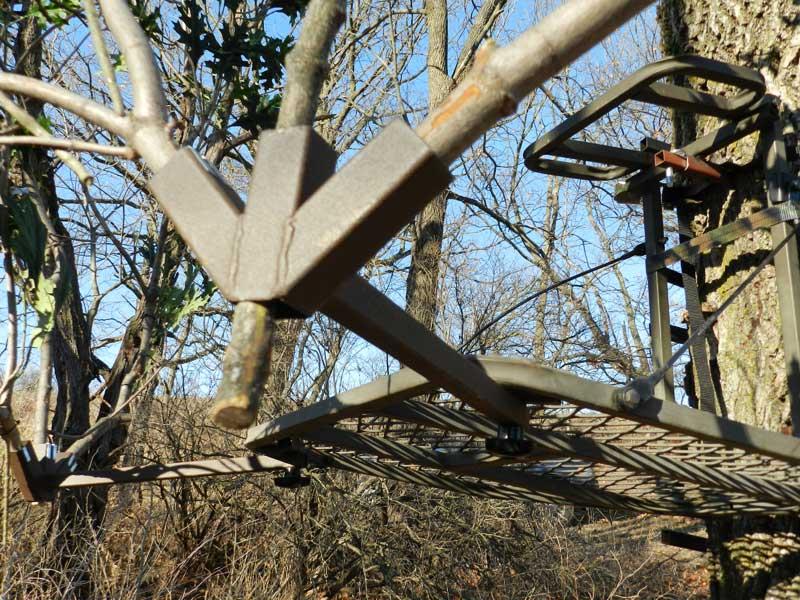 Tree Stand Chameleon Hunting