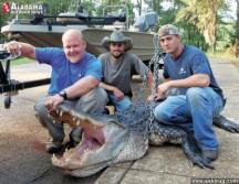 14 foot Alabama Gator.