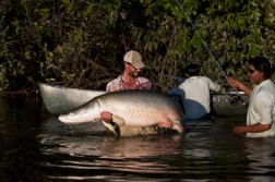 200 lb Arapaima with a Fly Rod