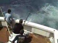 450 Pound Marlin Gets Destroyed