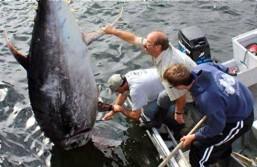 Angler accidentally nets $500,000 fish