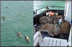 "Believe it… or Not! – ""Went fishing, caught 4 deer!"""
