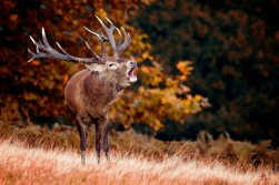 My dream animal to hunt!