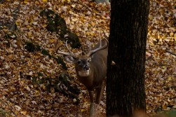 Best Picture of Whitetail Buck