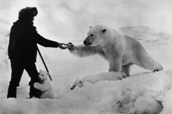 Best Vintage Polar Bear Photo