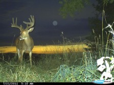 Big Buck in the Moonlight