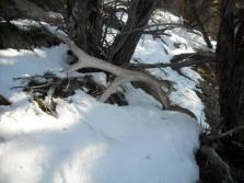 Big Elk Antler