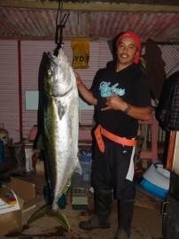 50kg Kingfish