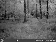 Bucks from gamecam