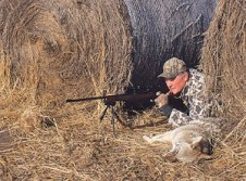 Choosing And Using The Right Coyote Calls