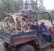 Collecting Elk Antlers