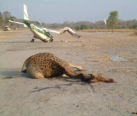 Dangers of Flying into Hunting Camp in Africa