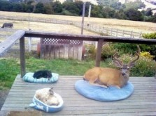 Deer are Better than Cats
