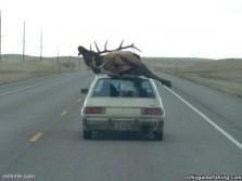 Dodge Omni makes a sweet ride.