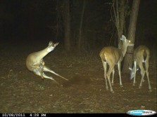 Doe Flipping Out!