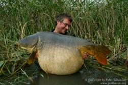 Fat French Carp