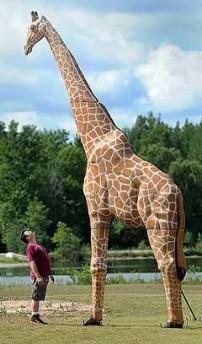 Giraffe target!