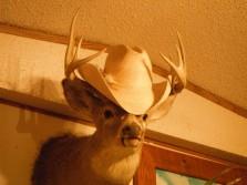 good hat rack huh!?