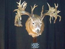 Hole in the Horn Buck